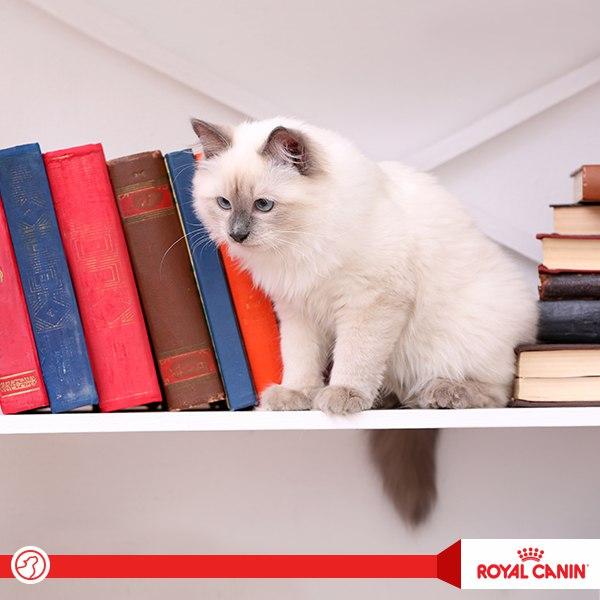 Какая из кошек не любит поиграть? Например, одно из их любимых развлечений — это...