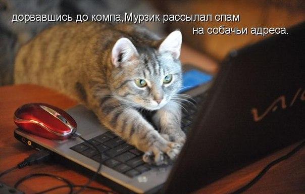 http://cs7052.vk.me/c540107/v540107238/14634/i_cWNBdd1UY.jpg