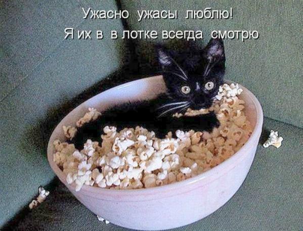 http://cs7054.vk.me/c540107/v540107244/13cf7/mW1Tg7pIiyw.jpg
