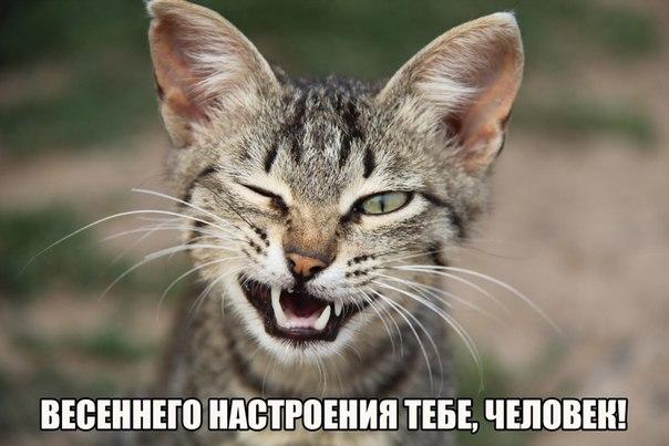 http://cs7054.vk.me/c540107/v540107244/156cb/bPD79uHUIDE.jpg
