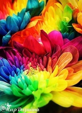 …чтобы в жизни было больше ярких красок… (6 фото) - картинка