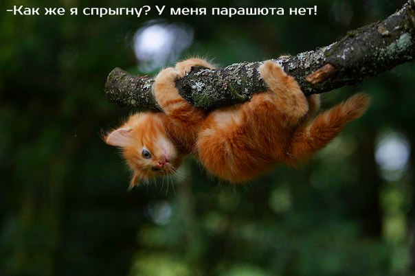 http://cs7063.vk.me/c540107/v540107244/49475/j4K0iC6R94A.jpg