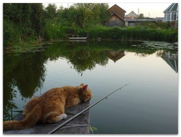 фото про рыбалку приколы