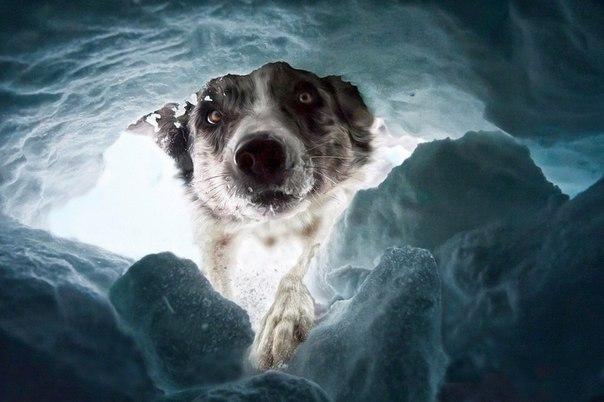 Под снежными лавинами в Швейцарии гибнет много людей. Собаки-спасатели — это ваш...