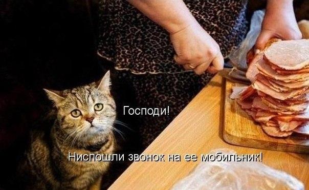 Вся правда о котэ - Страница 4 3wbIMZI66IE