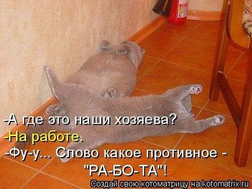 http://cs7063.vk.me/c540107/v540107291/1f9e7/w3huPlOUuAQ.jpg