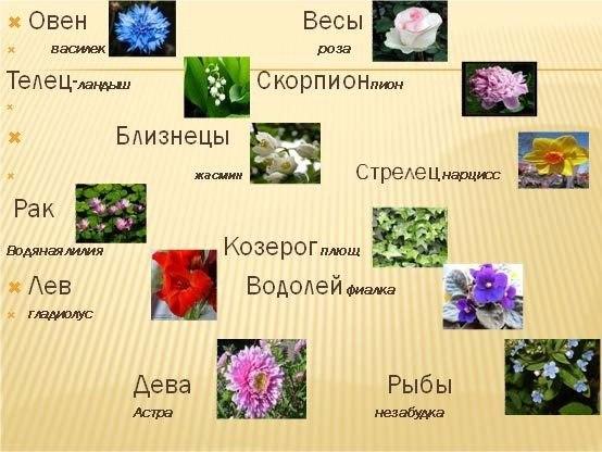 Цветы для знака зодиака рак