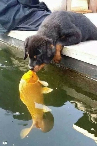 Да, животные тоже целуются и делают это восхитительно: ↪