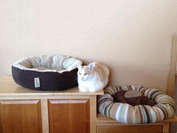 Кошачьей логики пост: ↪ В каждой фотографии — вся суть кошачьего поведения.