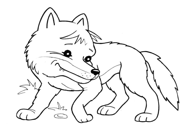 Раскраски про диких животных