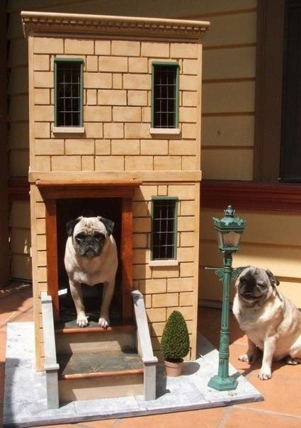 Оригинальные будки для собак (22 фотографии)
