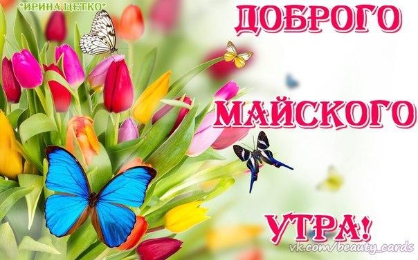http://cs14113.vk.me/c540107/v540107556/ddc5/wkMcwBdNYj0.jpg
