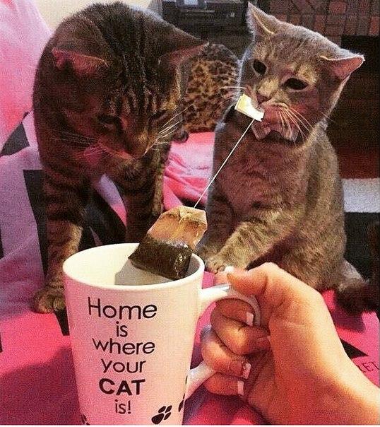 Дом там, где кот заваривает тебе чай: ↪ 30 фотографий, которыми коты могут гордиться.