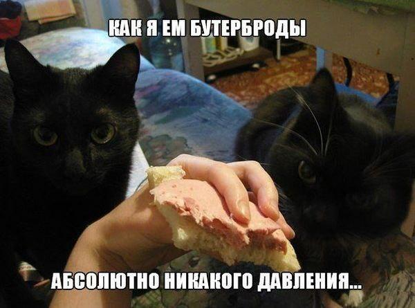 http://cs14113.vk.me/c540107/v540107592/12ef3/m3QPsSIyOvA.jpg