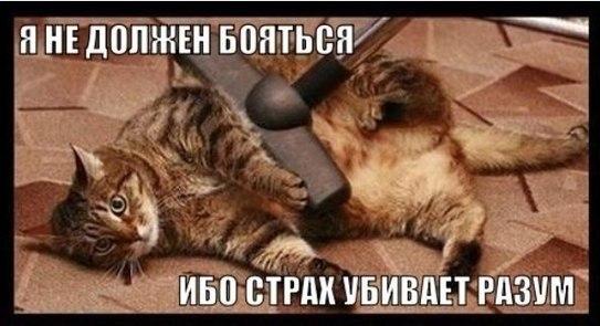 http://cs14101.vk.me/c540107/v540107592/9535/KftUl5PcbNg.jpg