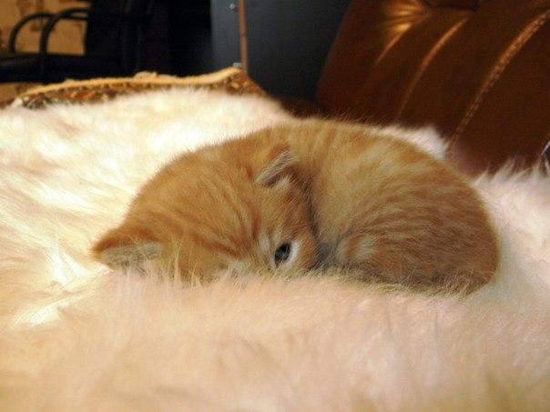 Кошки и прочие забавные животные  - Страница 3 AAQAn5z6DLM