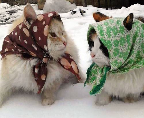 Кошки и прочие забавные животные  - Страница 4 9G1RieF8NzE