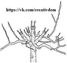 скачать штамб прививка деревьев