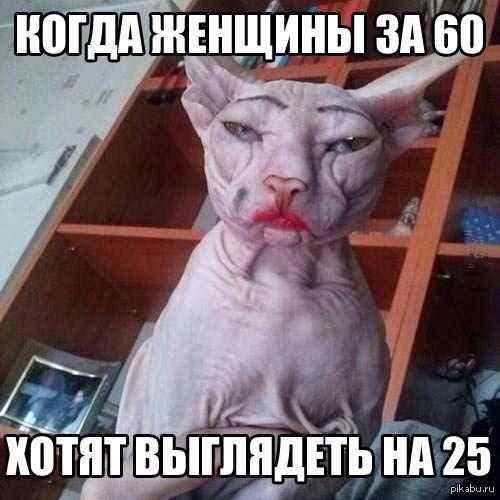 http://cs14115.vk.me/c540107/v540107697/10a41/ydzN6dyunmY.jpg