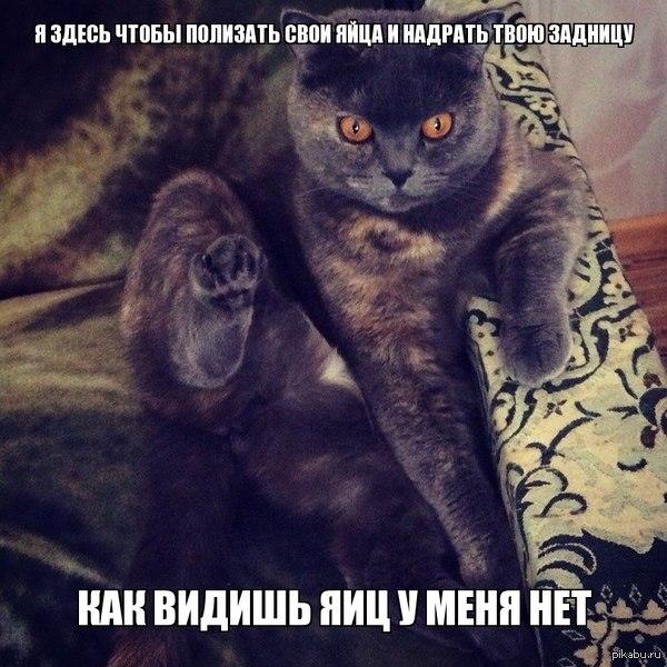 ya-lyublyu-lizat-yaytsa