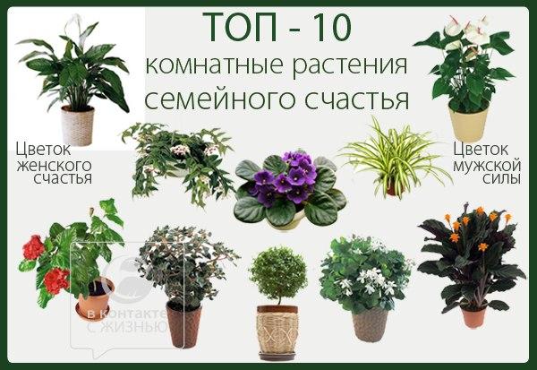 Цветы комнатные и список