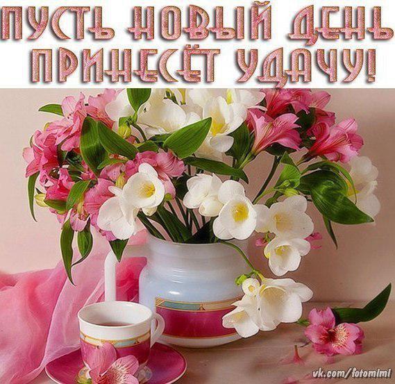 https://cs7053.vk.me/c540107/v540107782/262c0/IDhvTjLRz5Q.jpg