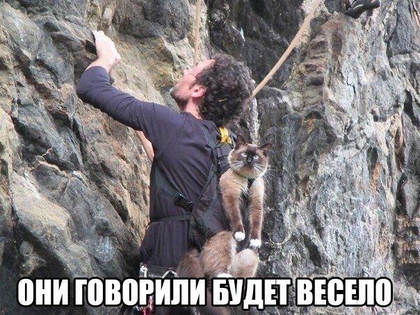 http://cs7054.vk.me/c540107/v540107802/19525/jdjbT70S0mM.jpg