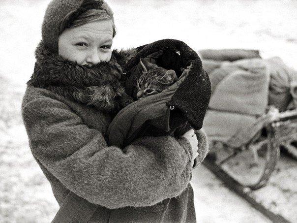 Удивительная история про кота из блокадного Ленинграда