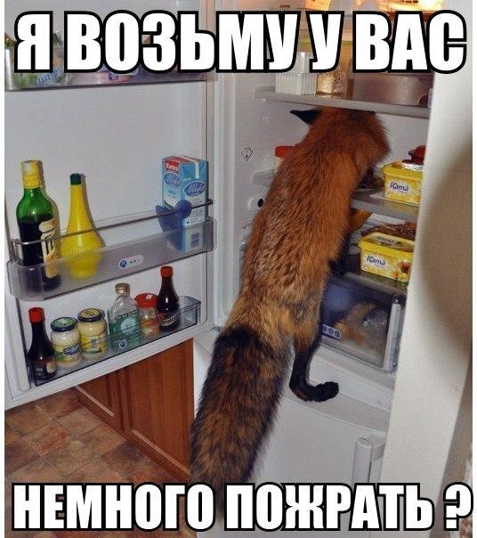 http://cs14109.vk.me/c540107/v540107818/7260/PLXiGEwzznA.jpg