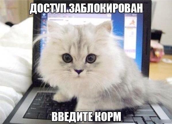 http://cs14106.vk.me/c540107/v540107818/d225/b4VLpzgeo8o.jpg