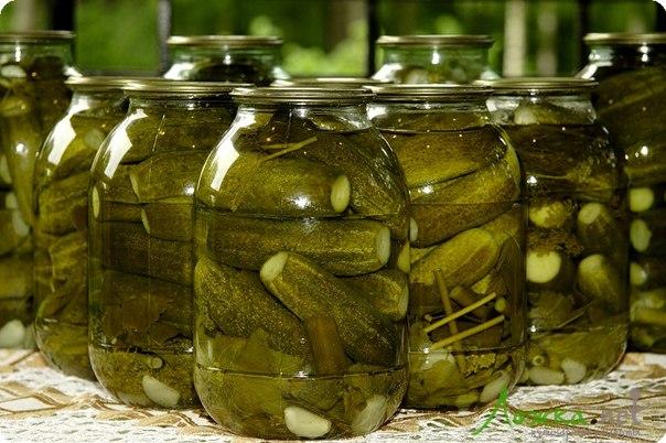Засолка огурцов - рецепты с фото / Простые рецепты