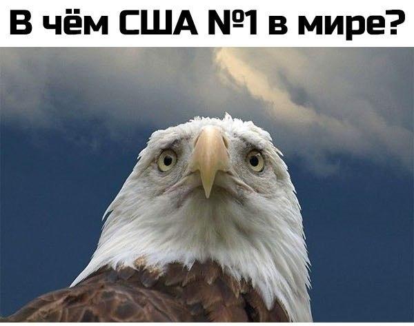 http://cs14112.vk.me/c540107/v540107886/e765/0O9saKqVD-Y.jpg