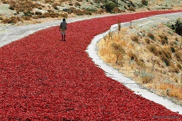 Сушка красного перца в Турции.