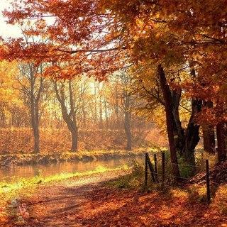 Отцвели цветы, падают листья, птицы молчат, лес пустеет и затихает.ОСЕНЬ. - Страница 6 GMpenmEuqTk