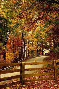 Отцвели цветы, падают листья, птицы молчат, лес пустеет и затихает.ОСЕНЬ. - Страница 6 OWiy_HSdAFQ