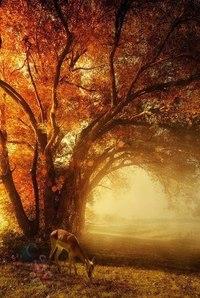 Отцвели цветы, падают листья, птицы молчат, лес пустеет и затихает.ОСЕНЬ. - Страница 6 Fbb7wnebRJw