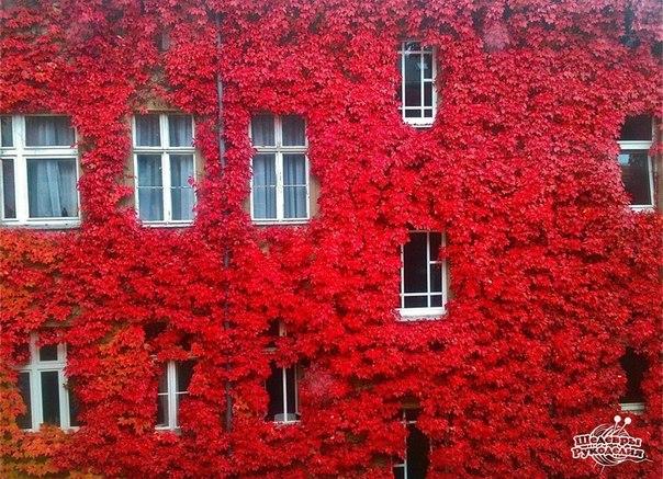 Живой декор стены. (1 фото) - картинка