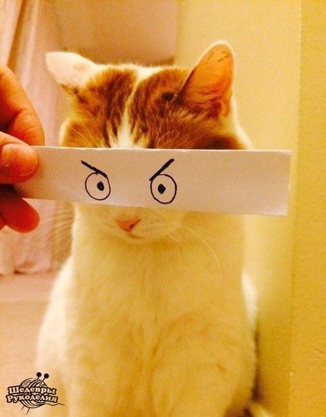Как развлечь себя, когда под рукой только бумага, ручка и кот… (8 фото) - картинка