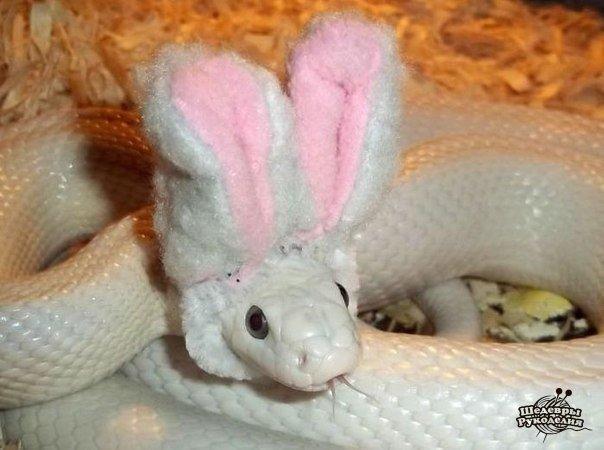 Как сделать змею менее страшной (1 фото) - картинка