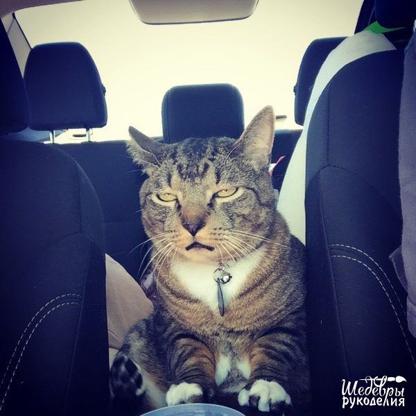 Твое лицо, когда в машине жарко, а тебя просят закрыть окно… (1 фото) - картинка