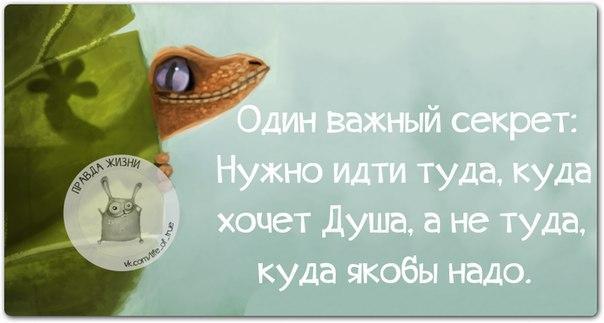 https://cs7052.vk.me/c540108/v540108123/216c8/jhNJpnvodKM.jpg