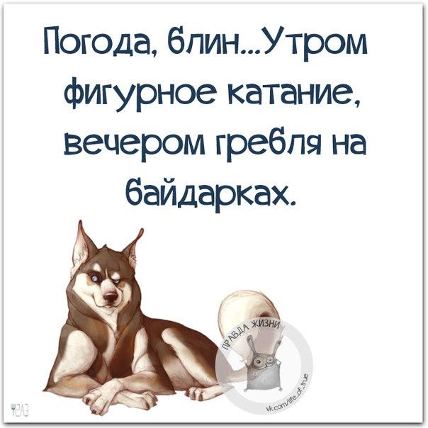 https://cs7052.vk.me/c540108/v540108123/220a6/BMf8UkZ7wFE.jpg