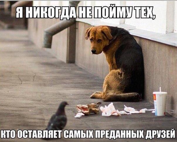 https://cs7055.vk.me/c540108/v540108201/112ab/cAh6z9r-6D4.jpg