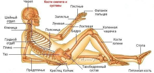 Частое мочеиспускание хруст суставов лошадиный гель для суставов для людей купить