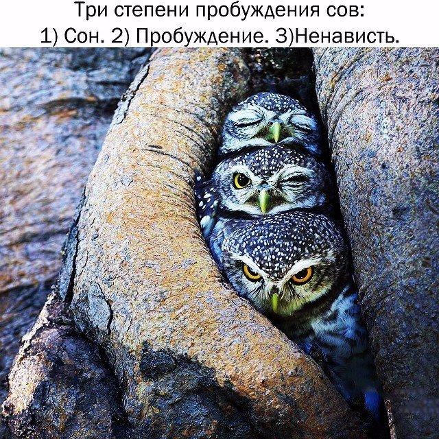 http://cs14102.vk.me/c540108/v540108486/10cf2/xC5twJr9A38.jpg