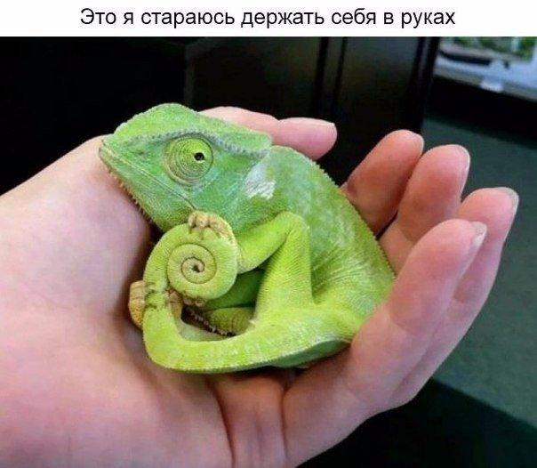 http://cs14102.vk.me/c540108/v540108486/a9d9/RN_KcElfndc.jpg