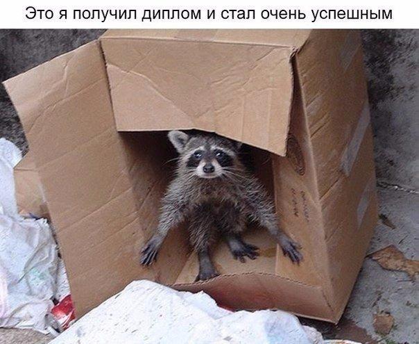 http://cs14102.vk.me/c540108/v540108486/a9f5/c7jx1bDWkI8.jpg
