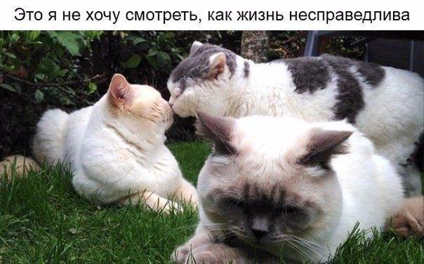 http://cs14102.vk.me/c540108/v540108486/a9fc/k8fFuK2bCqA.jpg