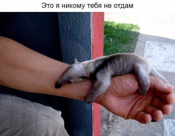 http://cs14102.vk.me/c540108/v540108486/aa03/waVzpWQsb3M.jpg