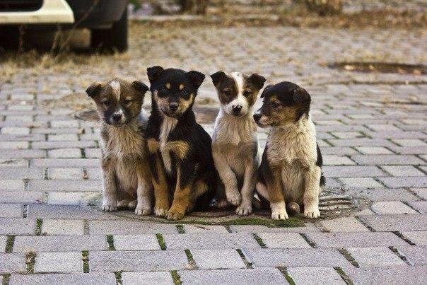 Картинки по запросу бездомные щенки